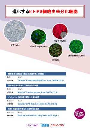 進化するヒトiPS細胞由来分化細胞