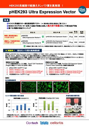 ヒトHEK293系細胞での組換えタンパク質高発現用ベクター