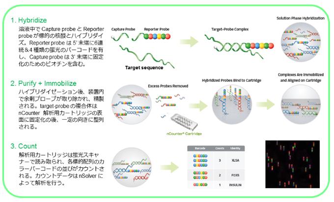 デジタルカウント遺伝子発現解析...