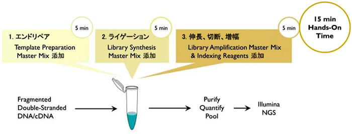 ThruPLEX DNA-Seq Kitの1チューブワークフロー