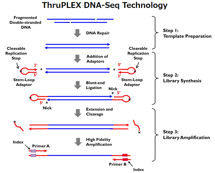 ThruPLEX DNA-Seq Kitのテクノロジー